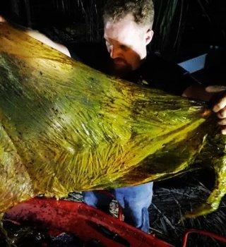 Hallaron a ballena muerta con 88 lb de bolsas plásticas en el estómago
