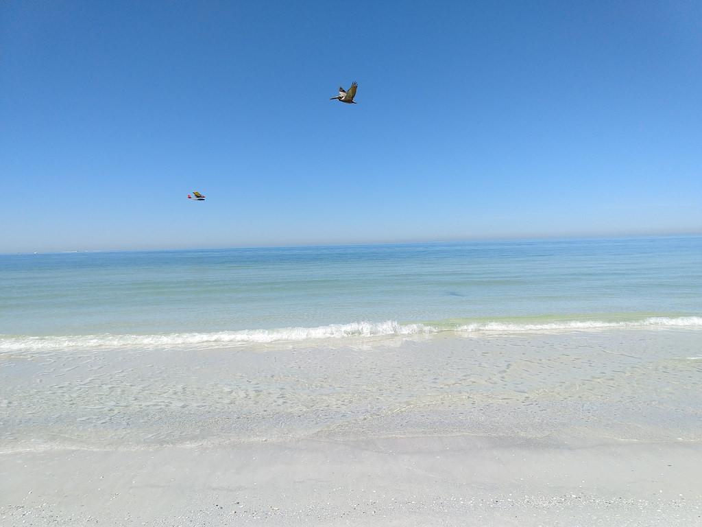 , la mejor playa de todo el país se encuentra en el área de Tampa Bay.