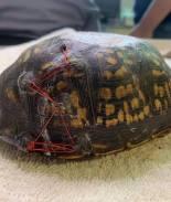 ¡No tires tu brassiere viejo! Podría salvar a las tortugas