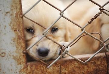 Perro esperó 4 años a su dueño en el mismo lugar donde se extravió