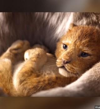 Disney se disculpa con escuela que pagó multa por mostrar El Rey León