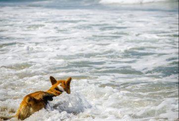 Veterinario advierte sobre grave peligro del agua salada para los perros