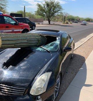 cactus atraviesa carro