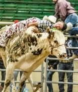 Mexicano al borde de la muerte tras ser golpeado por un toro