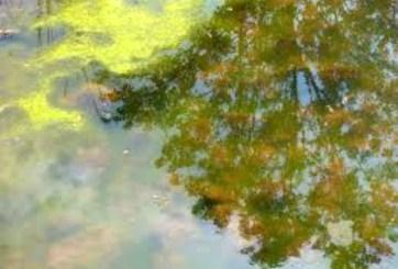 Alertan por algas altamente tóxicas en estos 3 parques de Nueva York