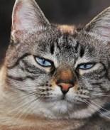 VIDEO: Se quedaba dormida porque su gato apagaba la alarma cada mañana