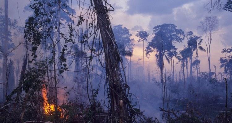 incendio amazonas