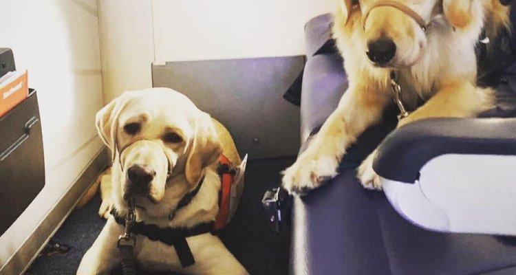 Envían perros de servicio para ayudar a víctimas del tiroteo de El Paso