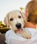 Trump firma ley que criminaliza el maltrato animal