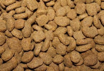 Advierten a dueños de mascotas alejarse de estos alimentos para perros