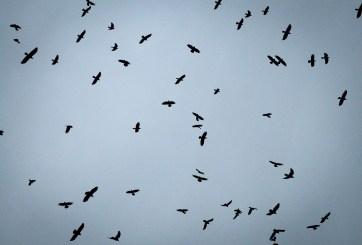 aves en huracán