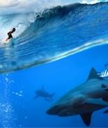 surfista y tiburón