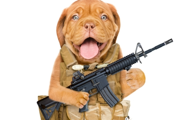 perro con arma