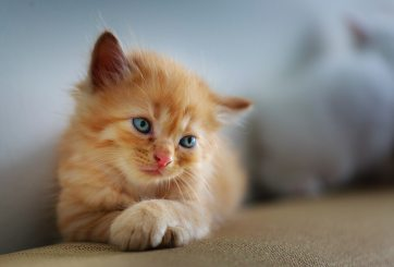Cientos de gatos podrían ser sacrificados si no son adoptados