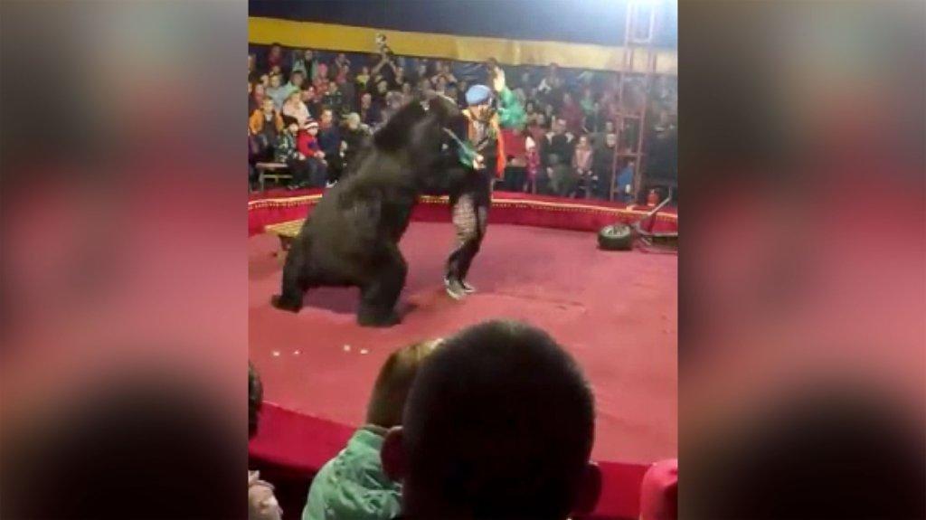 ataque de osos en circo