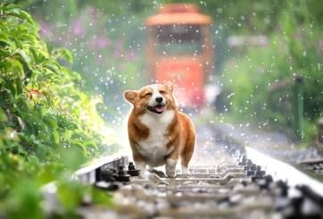 Tras un año de desaparecer en explosión perrito logra regresar a casa