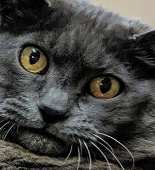 Gato gordo conquista al Internet con su conmovedora rutina de ejercicios