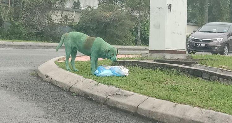 Encuentran a un perro pintado de verde, llorando y buscando comida