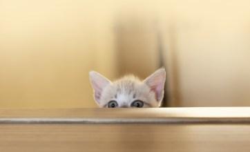 gatito ocultándose