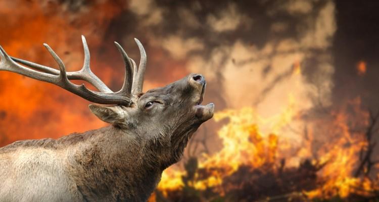 10 animales murieron tras incendio en parque de vida salvaje de Ohio