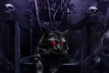 Los gatos transmiten parásitos que podrían causar apocalipsis zombie