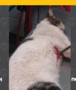 VIDEO: Asesinan a gato atravesándole una flecha en Texas