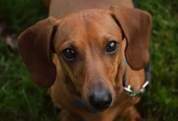 Veterinario es arrestado por maltratar a un perro causándole la muerte