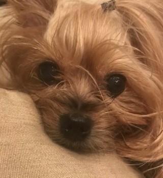 VIDEO: Perro muere aplastado con paquete lanzado por repartidor de FedEx