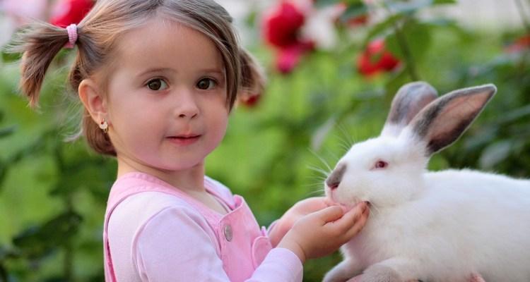 Por accidente hizo creer a sus vecinos que su conejo había resucitado
