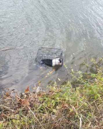 VIDEO: Encuentran a perro flotando dentro de una jaula en un lago