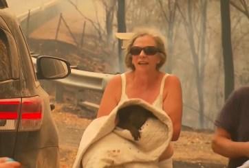 VIDEO: Arriesgó su vida y rescató a koala de incendio en Australia