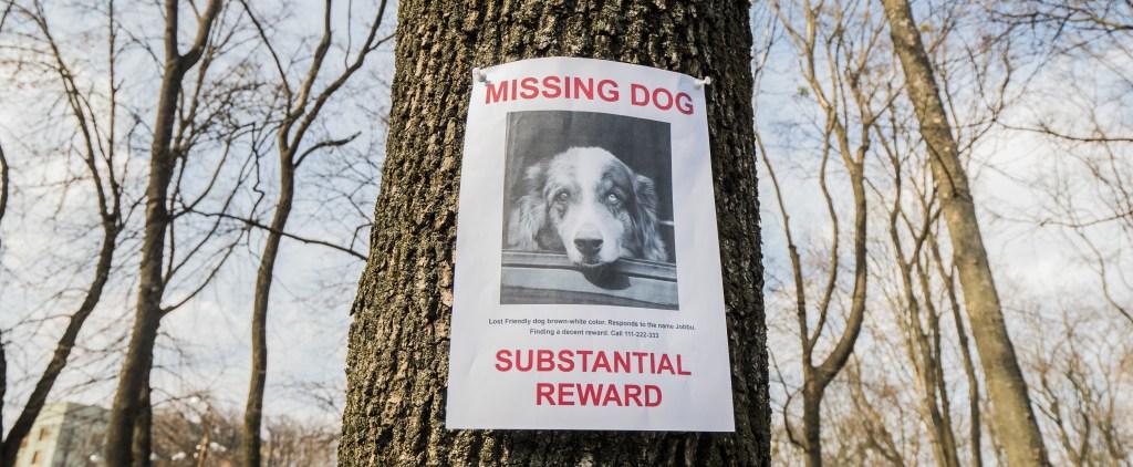 recompensa perro