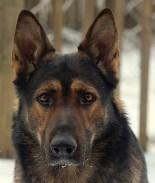 Criminal violento descuartizó al perro de su exnovia como venganza
