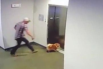 perro atorado en elevador