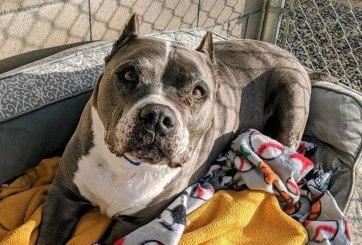 FOTOS: Este perro fue adoptado tras más de 5 años en un refugio