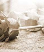 Vende rosas para poder repatriar el cuerpo de su hijo y despedirse de él