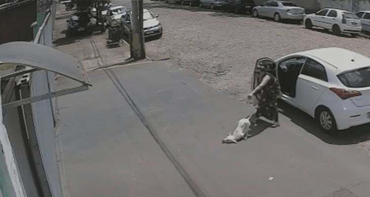 VIDEO VIRAL: Mujer abandonó cruelmente a un perro sin patas delanteras