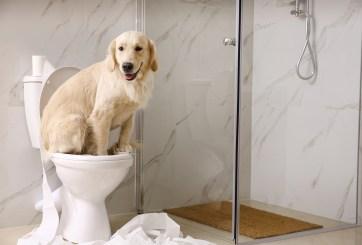 perro inodoro