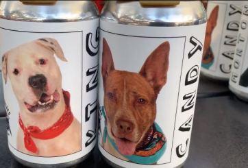 Gracias a los perros en latas de cerveza, encontró su mascota perdida
