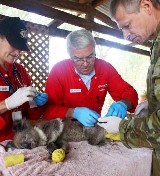 Más de mil millones de animales han muerto en incendios de Australia