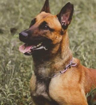 Despiden a Agente canino de Patrulla Fronteriza
