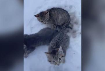 Hombre usó su café para liberar a 3 gatitos atrapados en el hielo