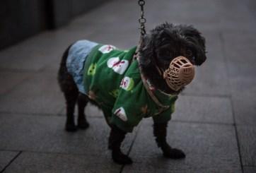 Ponen en cuarentena a mascotas en Hong Kong por perro con coronavirus