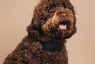 Inventan collar para perro que dice groserías cuando tu mascota ladra