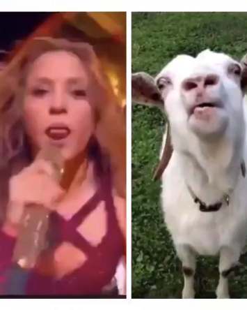 FOTOS: La lengua de Shakira y otros memes del Super Bowl