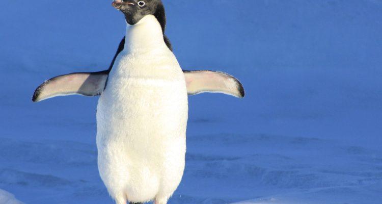 Pingüinos visitan a otros animales en acuario cerrado por coronavirus
