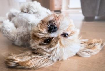 Refugio de animales motiva a adoptar una mascota durante pandemia
