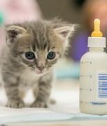 Fotos: Sociedad Protectora en San Diego pide donaciones para gatitos