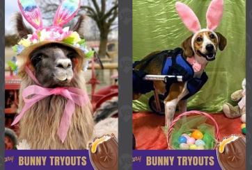 Cachorro y llama: finalistas del Cadbury Easter Bunny Contest