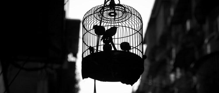 Liberó a sus aves tras pasar tiempo en aislamiento por cuaretena